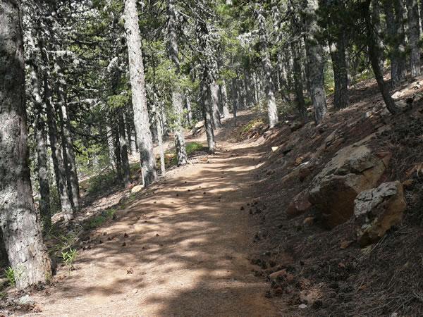 Taken from natureofcyprus.org