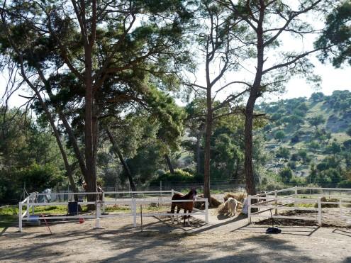Riding Club stables