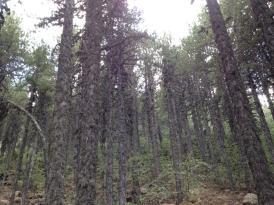 artemis trail 2