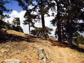 artemis trail 3